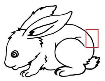 简笔画 动物简笔画 呆萌小兔子 查看全文 兔子是